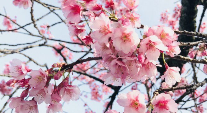 春休み期間のお知らせ